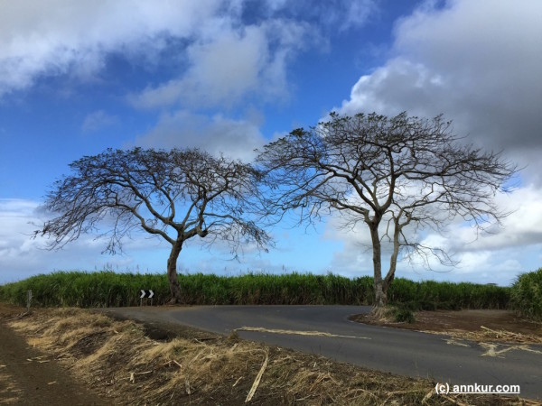 Mauritius Roads - Biking Around